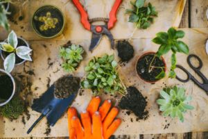 gardens bring positive energy during isolation