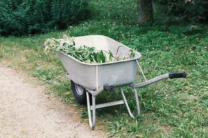 spring cleanup with a wheelbarrow